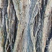 Old Tree Wrinkles Art Print