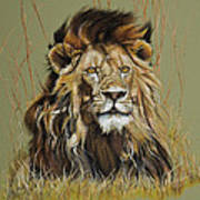 Old Warrior African Lion Print by Mary Dove
