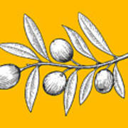 Olive Branch Engraving Style Vector Art Print