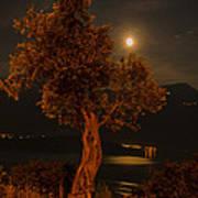 Olive Tree Under Moonlight Art Print