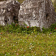 Olympia Ruins And Wild Flowers   #9821 Art Print