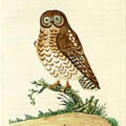 Ominous Owl Art Print