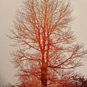 On Fire In The Fog Print by Lois Bryan