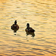 On Golden Pond Ducks Art Print