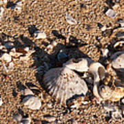 On The Beach 03 Art Print