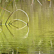On The Pond Art Print