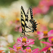 On The Top - Swallowtail Butterfly Art Print