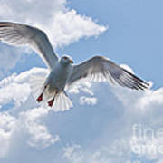 On The Wings Of A Gull Art Print
