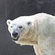 One Angry Polar Bear Art Print