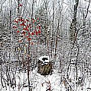 One Lone Log Art Print by Dianne  Lacourciere