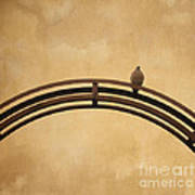 One Pigeon Perched On A Metallic Arch. Art Print