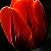 One Red Tulip Art Print