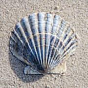 One Shell Art Print