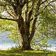 One Spring Tree Art Print