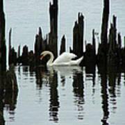 One Swan Art Print