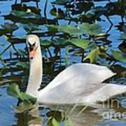 One Swan In The Lilies Art Print
