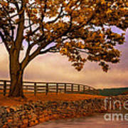 One Tree Hill Art Print by Lois Bryan