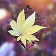 One Yellow Maple Leaf Art Print