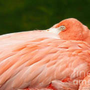 Flamingo With An Open Eye Art Print