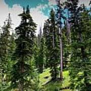 Open Subalpine Forest Art Print