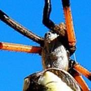 Orange And Black Spider Legs Art Print
