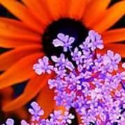 Orange And Lavender Art Print