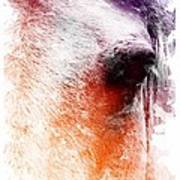 Orange And Violet Abstract Horse Art Print by Diana Shively