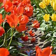 Orange And Yellow Tulips Art Print