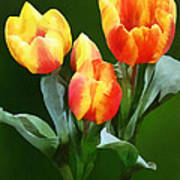 Orange And Yellow Tulips Art Print