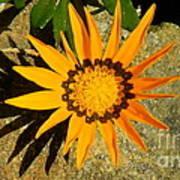 Orange Blossom Malaga Spain Art Print