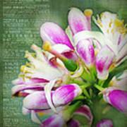 Orange Blossom Special Art Print