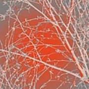 Orange Branches Art Print