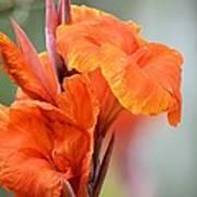Orange Cana Art Print