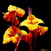 Orange Cannas Art Print