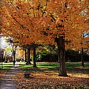 Orange Canopy - Davidson College Art Print