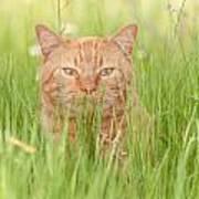 Orange Cat In Green Grass Art Print