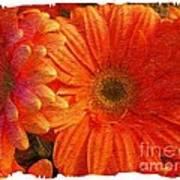 Orange Daisies Painterly With Border Art Print
