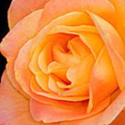 Orange Delight Art Print