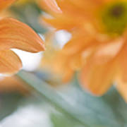 Orange Design. Paintrly Chrysanthemum  Art Print