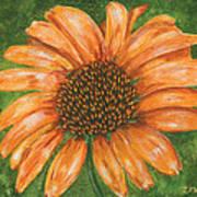 Orange Echinacea Art Print