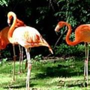 Orange Flamingo Art Print