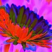 Orange Flower From Side Art Print