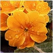 Orange flower with water drops Art Print