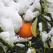 Orange In Snow Art Print