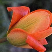 Orange Lady Art Print