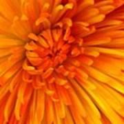 Orange Light Art Print