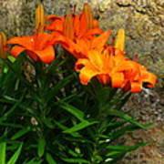 Orange Lilies Art Print