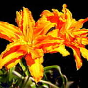 Orange Lily Twins Art Print