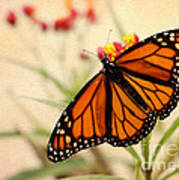 Orange Mariposa Art Print