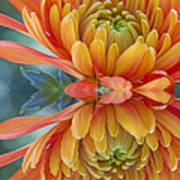 Orange Mum's Watery Reflection Art Print